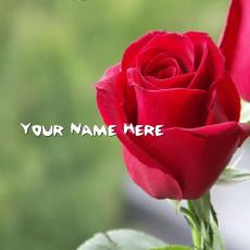 Simple name pictures - Red Rose